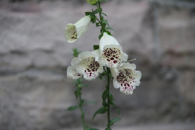 I love mountain flowers