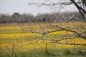 It's spring in the country - photo taken 3/20