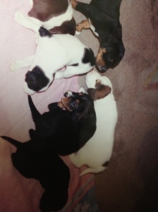 A pile of puppies - she is the black and brown with the white nose.