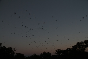 Bats are not blind - they actually have great site - better than humans
