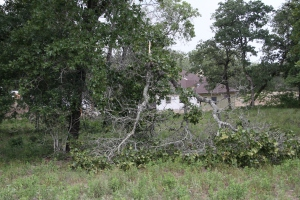 The tree is closer to Crockett lane - there are several like this across our 6+ acres