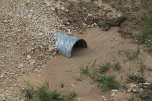 Lilly's culvert!  Corey had created some berms for our culvert and we are happy to report they are diverting the water as planned.