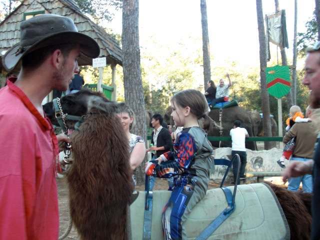 See it really is a llama