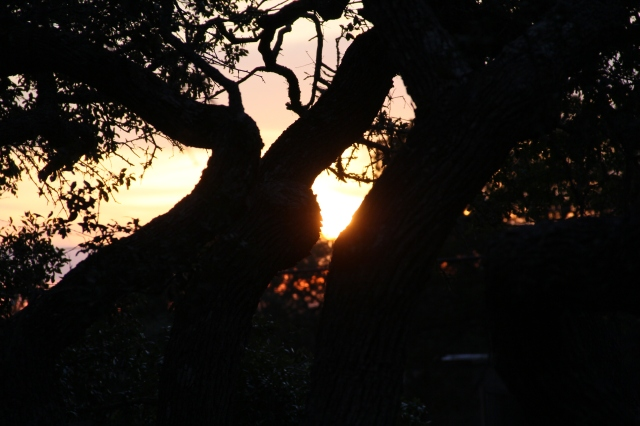 Sunset through the trees - the trees at WQR are AMAZING!